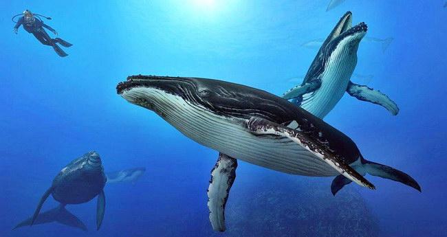 endless-ocean-2-whales-wallpaper Сайт